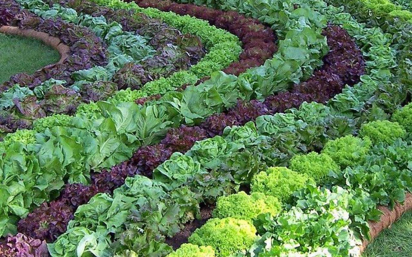 Сульфат амонію для сільськогосподарських культур