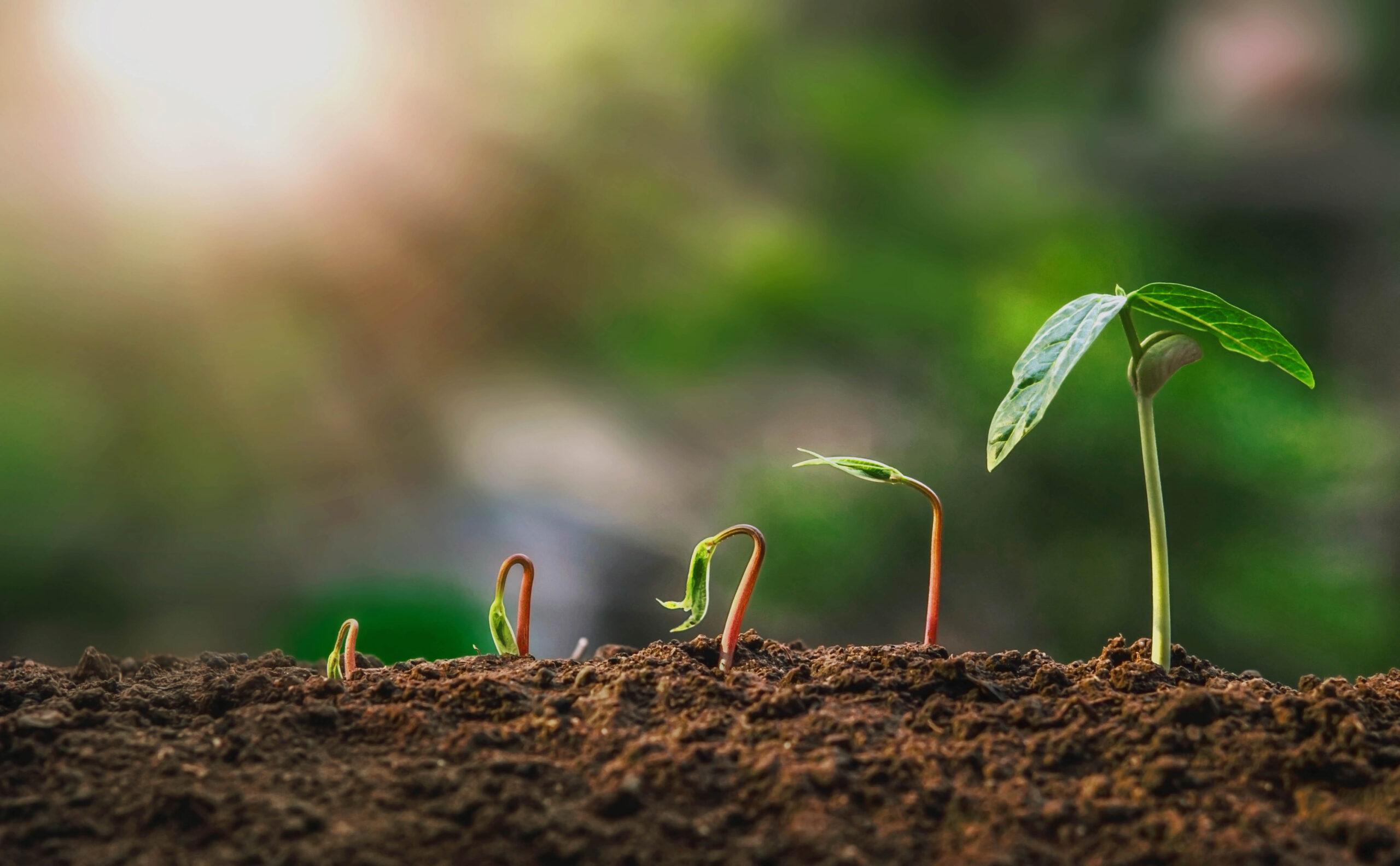 Чому ТрансХімТрейд розробила нові формули добрив для рослин?