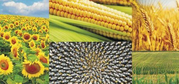 Випробування нових видів добрив на полях Агрохолдингів